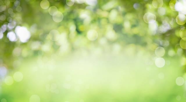 Cromoterapia: benefici e usi del colore verde