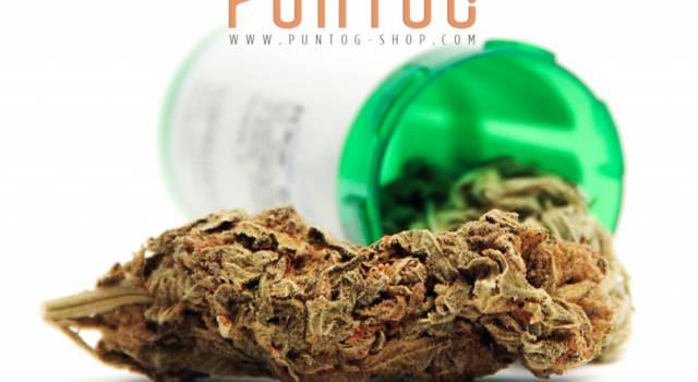 Cannabis legale e olio di CBD: stessa pianta ma usi diversi, scopriamoli insieme
