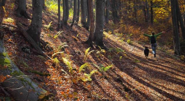 Perchè dovresti passeggiare nel bosco?