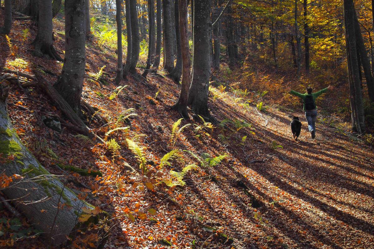 Camminare nel bosco