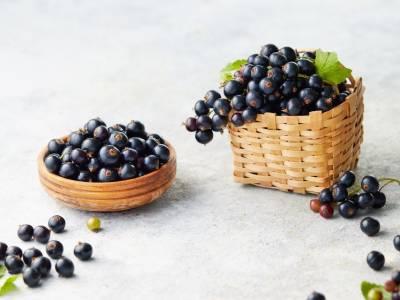 Ribes nigrum, un frutto dai mille benefici: proprietà, controindicazioni e usi
