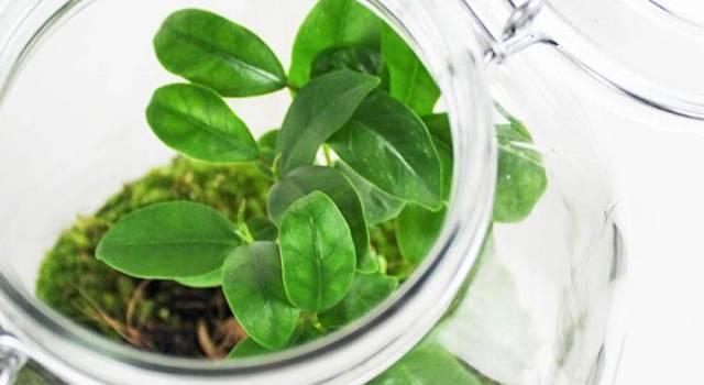 Spopola la pianta mania mignon: la passione per il green!
