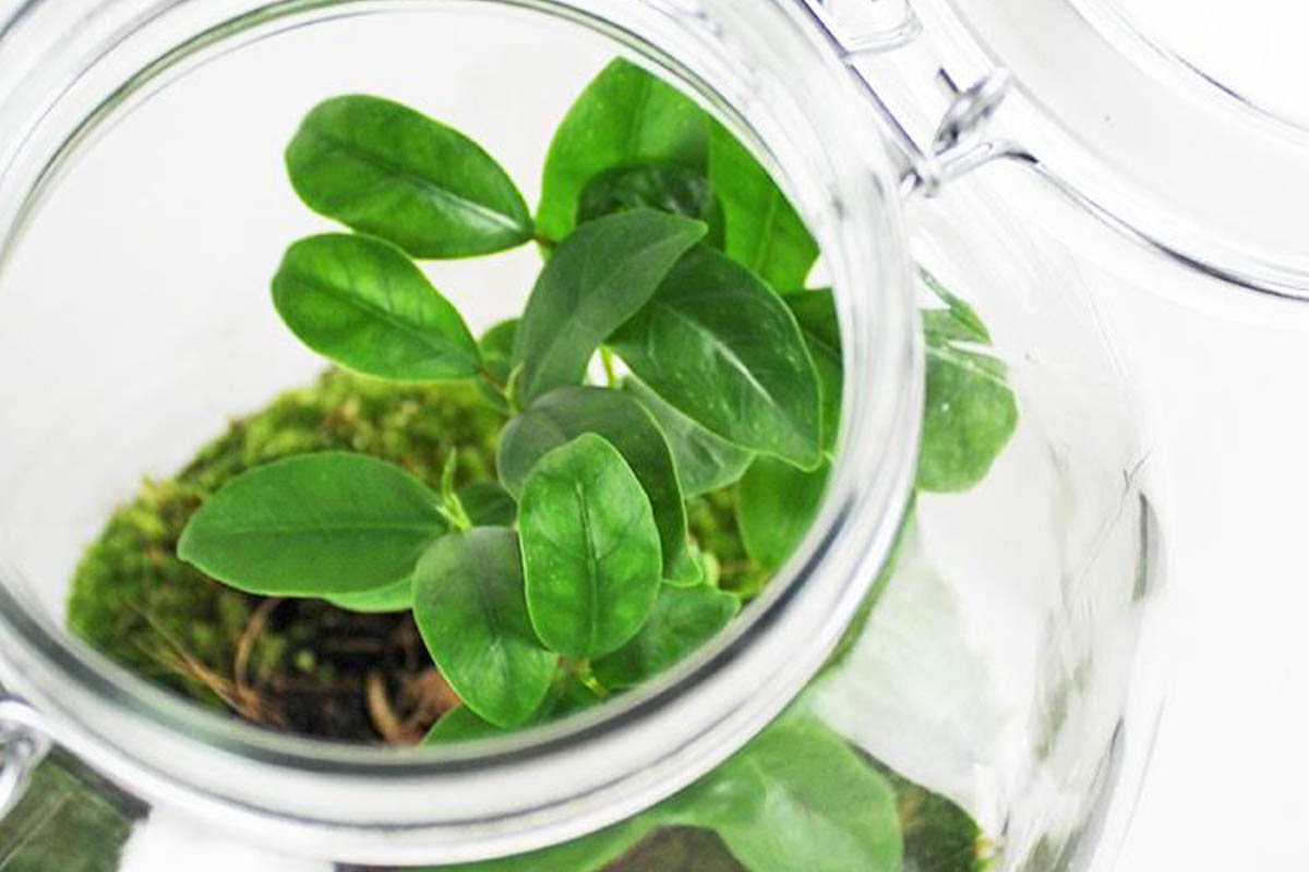 Mini serra in vaso