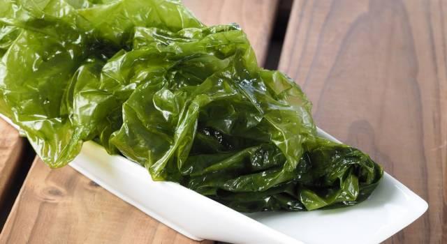 Che cos'è la lattuga di mare: proprietà e valori nutrizionali