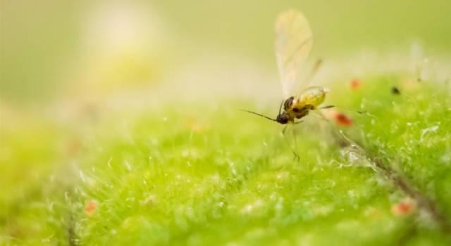 Come eliminare i moscerini in casa: ecco i segreti e i metodi più efficaci!