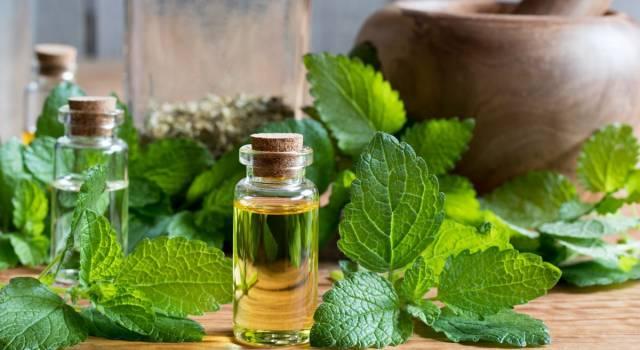 Un rimedio naturale contro l'insicurezza: l'olio essenziale di melissa