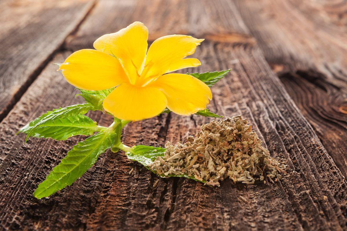 Fiore di damiana