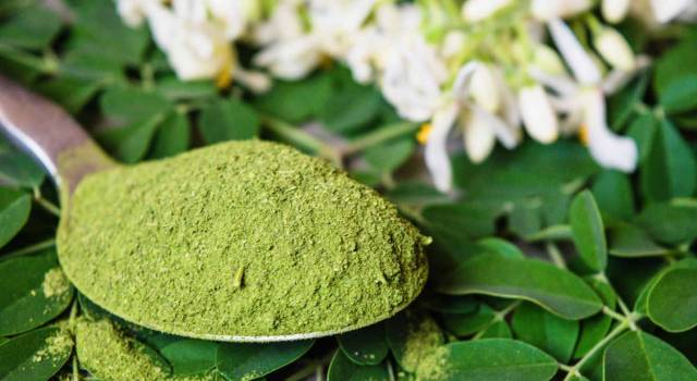 Moringa oleifera: il superfood dalle proprietà miracolose
