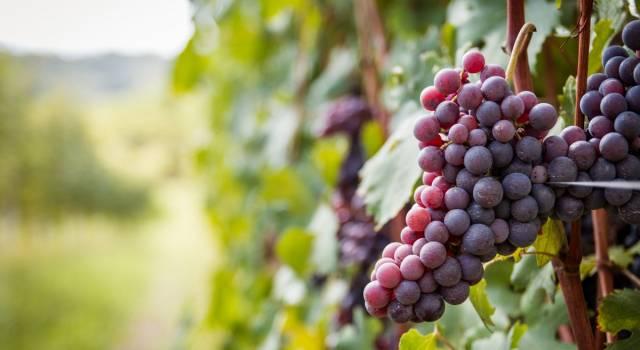 Frutta di stagione di settembre: scopriamo i primi profumi d'autunno