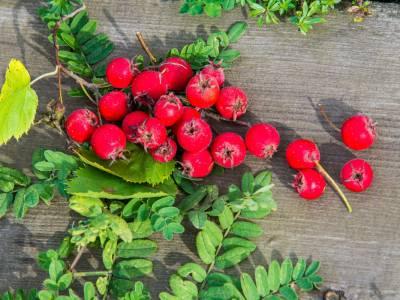 Le azzeruole, ecco tutti i benefici del frutto che controlla la pressione