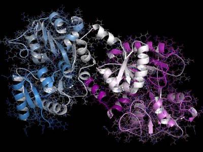 Lattoferrina, la proteina che regola le difese immunitarie