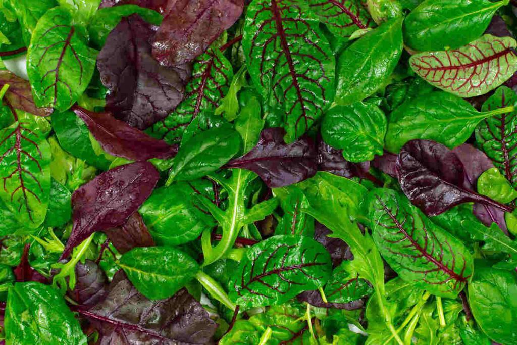 foglie di insalata